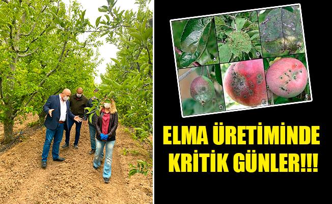 ELMA ÜRETİMİNDE KRİTİK GÜNLER!!!